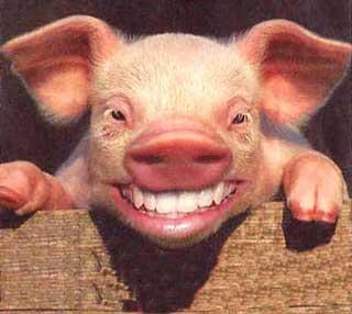 Porco Sorrindo EuGordinha