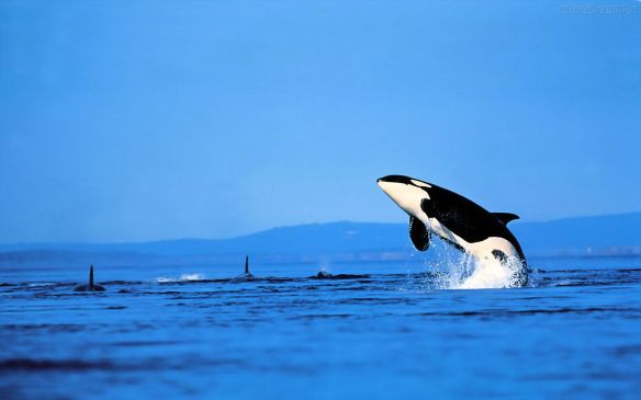 Baleia no mar Blgo EuGordinha