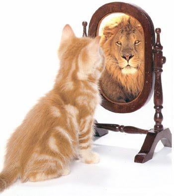Gato se vendo leão no espelho