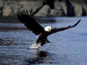 aguia EuGordinha