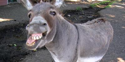 burro rindo EuGordinha
